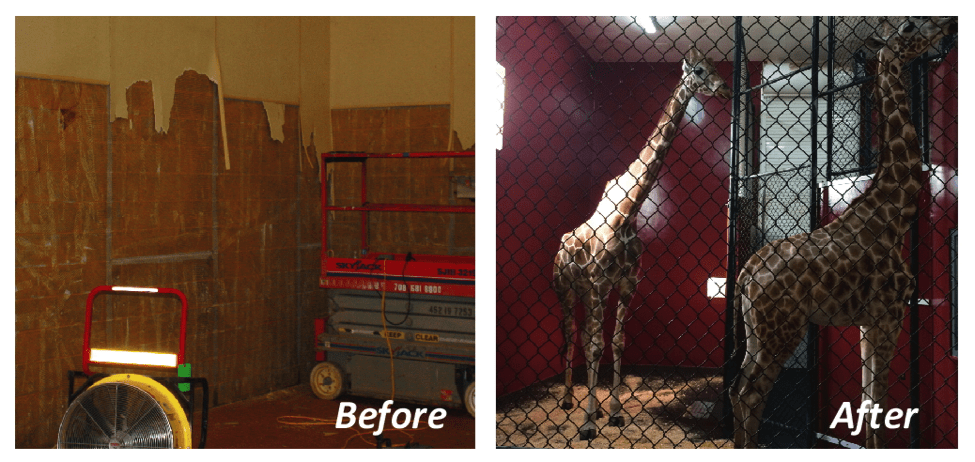 zoospec-before-after